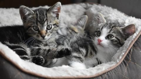 Vijf kittens in plastic tas afgegeven bij dierenasiel
