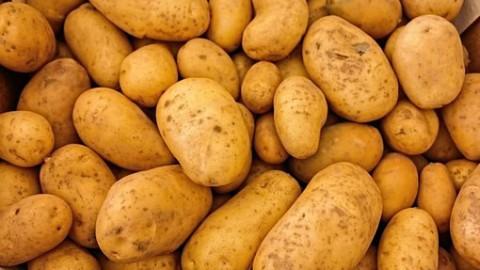 Aardappeltelers hadden het mis